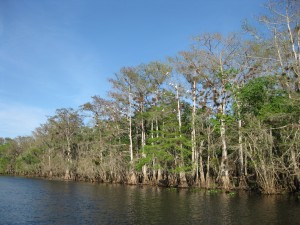 St Johns River