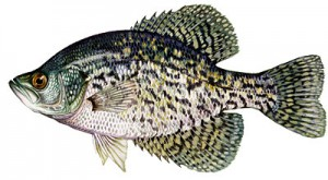 Top Florida Crappie Lakes