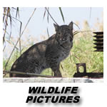 FLORIDA WILDLIFE BILDER