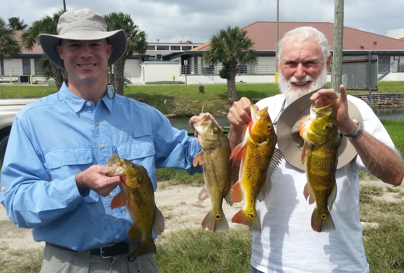 Miami Peacock Bass Fishing Bass Online 888-629-2277