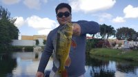 Blue Lagoon Miami Park Peacock Bass Fishing